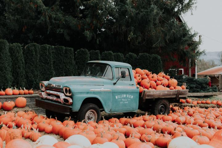 5 Fun Things to do in Metro-Detroit thisFall